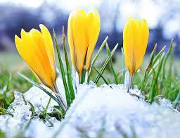 Pierwsze oznaki wiosny w ogrodzie | Blog ogrodniczy | Porady ogrodnicze | Krysiak.pl
